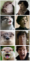Otters Who Look Like Benedict Cumberbatch.png